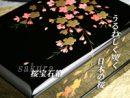 ジュエリーボックス桜